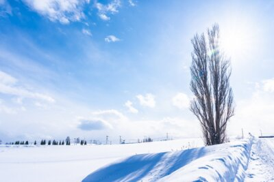 Fototapete Beautiful outdoor nature landscape with tree of ken and mary in biei area Hokkaido Japan