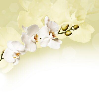 Fototapete Beautiful white orchid