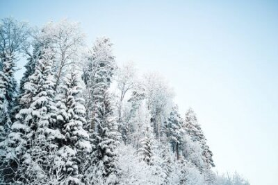Fototapete Beautiful winter landscape, forest trees, pines and firs covered with snow against the sky