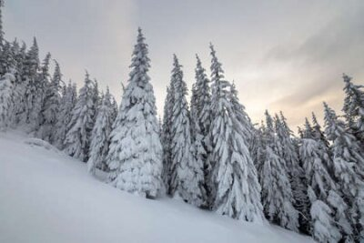 Fototapete Beautiful winter mountain landscape. Tall spruce trees covered with snow in winter forest and cloudy sky background.