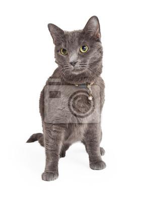 Fototapete Benachrichtigungs Grau Hauskatze Kurzhaar Katze sitzt