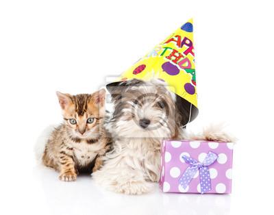 Bengal Katze Und Biewer Yorkshire Terrier Welpen Mit Geburtstag