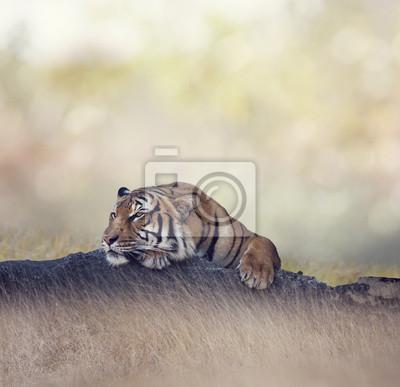 Bengal-Tigerstillstehen