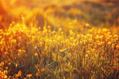 Fototapete Bereich der Frühlingsblumen