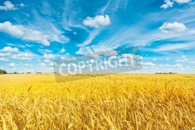 Fototapete Bereich der goldenen Weizen und bewölktem Himmel