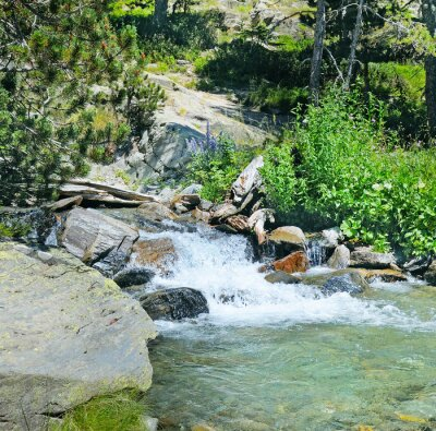 Fototapete Berg-Fluss und Nadelwald