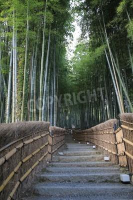 Beruhmte Bambushain Bei Arashiyama Kyoto Japan Fototapete
