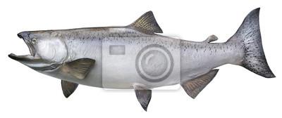 Big Chinook oder König Lachs isoliert auf weiß