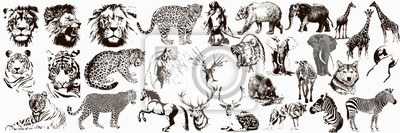 Fototapete Big collection of wild animals. Exotic danger African. Tropical. Vector illustration on white background.