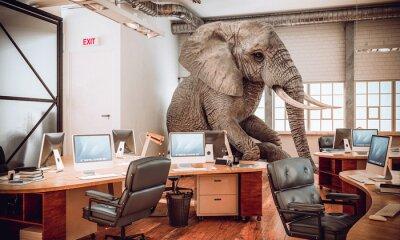 Fototapete big elephant sitting inside an office.
