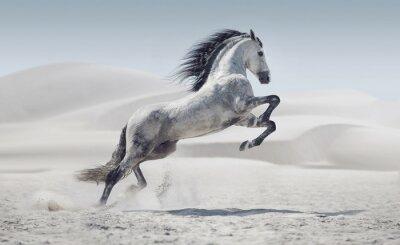 Fototapete Bild präsentiert die weißen Pferd im Galopp