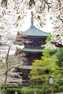 Fototapete Bild von schönen sakura seasnon in Kyoto, Japan