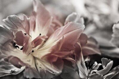 Fototapete Bildende Kunst der Nahaufnahme Tulpen, unscharfen und scharfen