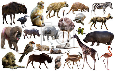 Fototapete Birds, mammal and other animals of Africa isolated