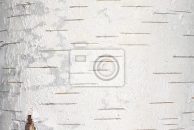 Fototapete birkenrinde  Birkenrinde textur natürlichen hintergrund papier close-up ...