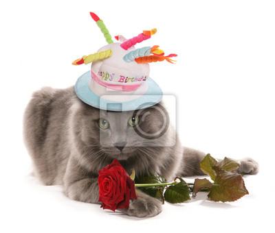 Birthday Cat Fototapete O Fototapeten 14 Februar Alles Gute Zum
