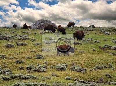 Bisons Fütterung in den Bergen