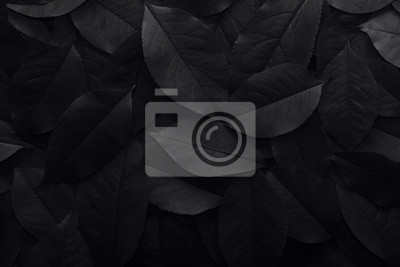 Fototapete Black background. Background from autumn fallen leaves closeup. Black and white photo.