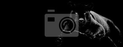 Fototapete Black jaguar with a black background