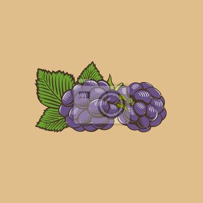Blackberry im Weinleseart. Farbigen Vektor-Illustration