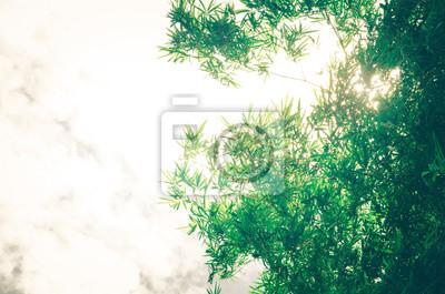 Blatmuster Verlasst Bambus Oder Abstrakten Hintergrund Grune