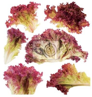 Blatt der roten Salat