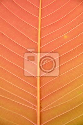 Blatt Textur