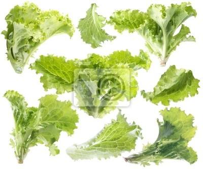Blatt von grünem Salat. Isoliert mit Clipping-Pfad