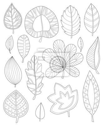 Blätter färbung für erwachsene, sammlung von blättern für ...