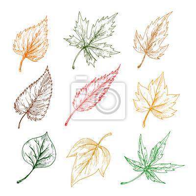Blätter von Bäumen Skizze Symbole