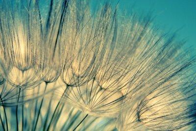 Fototapete Blau abstrakte Löwenzahn Flower Hintergrund
