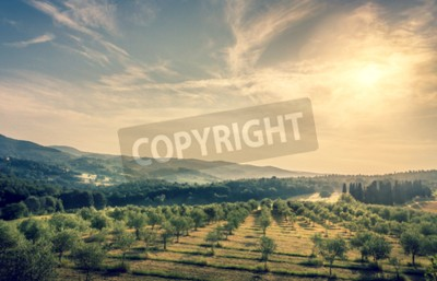 Fototapete Blauer Himmel über Oliven-Feld in der Toskana
