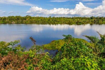 Fototapete Blick auf den See im Amazonas Regenwald, Manaos, Brasilien