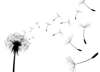 Fototapete Blow Dandelion on white background
