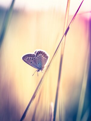 Fototapete Blue butterfly on the grass