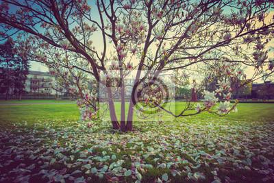 Fototapete Blühende Magnolie und Blütenblätter auf dem Rasen