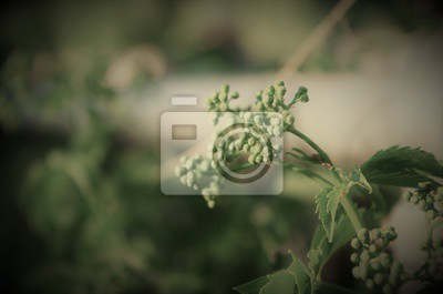 Fototapete Blühende Rasen Unkraut