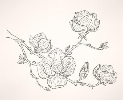 Fototapete blühenden Magnolie