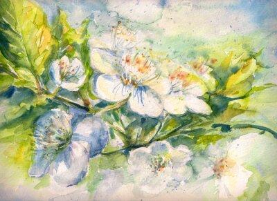 Fototapete Blühender Zweig der Kirschbaum Aquarell gemalt