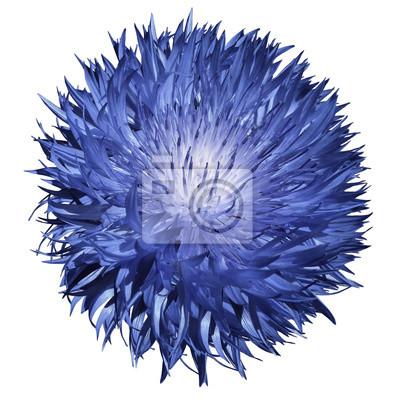 Blume blau auf einem weißen hintergrund isoliert mit clipping-pfad ...
