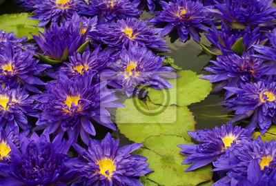 Garten blumen blau  Blume, natur, lila, garten, blumen, pflanze, blüte, sommer, blüte ...