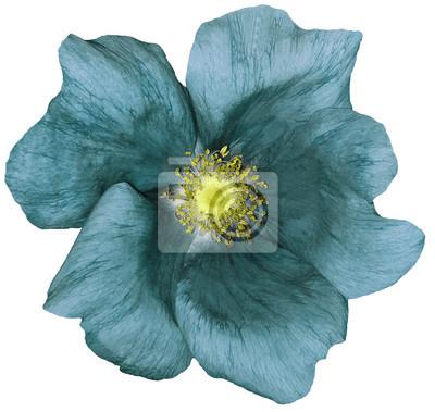 Blume türkis auf einem weißen isoliert hintergrund mit ...