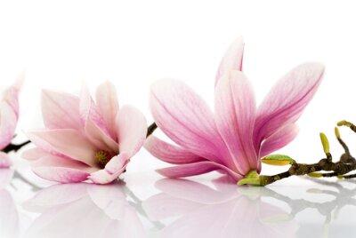 Fototapete Blumen