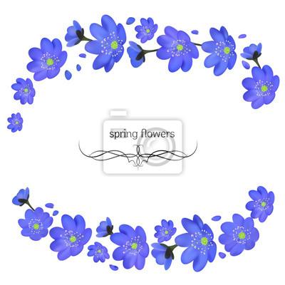 Blumen. blau. rahmen. hepatisch. blumen hintergrund. rand. vektor ...