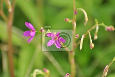 Blumen Bunt Im Garten Verwenden Sie Als Hintergrundbild Schöne