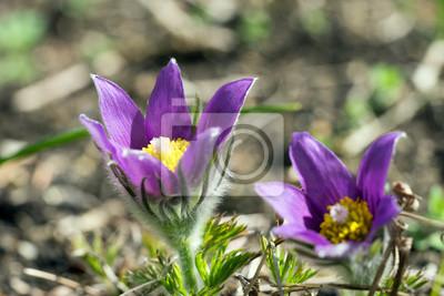 Blumen Schöne Blumen In Einem Garten Fototapete Fototapeten