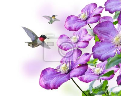 Blumen und Kolibris