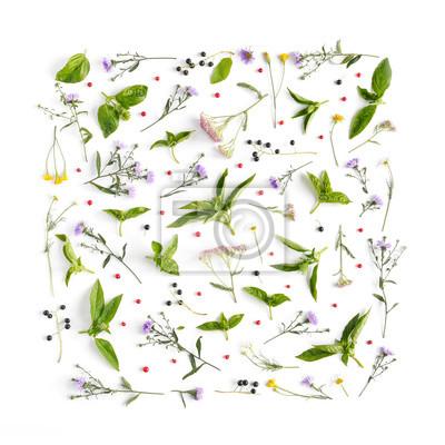 Blumen Und Pflanzen Auf Weißem Hintergrund Rahmen Von Blumen