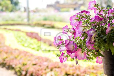 Blumen Und Zierpflanzen Im Garten Fototapete Fototapeten Schöne