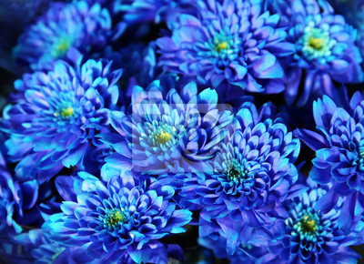Blumenstrauss Der Blauen Herbst Chrysantheme Close Up Fototapete